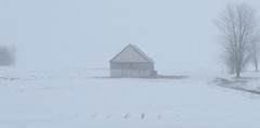 DSC_6117a (Fransois) Tags: winter white snow monochrome field barn hiver qubec neige blanc qc grange champ winterstorm rougemont tempte