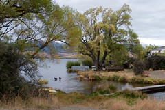 bridge trees newzealand sky lake mountains water boats swans walkway nz southisland lakealexandrina whakatukumoana