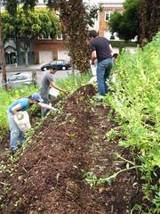 Chop and drop, plus leaf mulch_4668312928_l