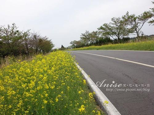 6濟州島油菜花_001.jpg