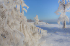 Ice Trees (Philocycler) Tags: snow chicago ice canon reader bluesky chicagoist hss chicagolakefront icetrees canon35mmf14l canon5dmarkiii