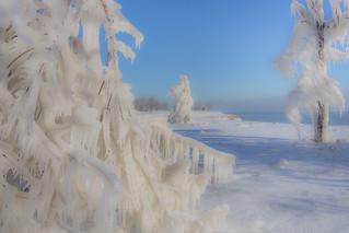 Ice Trees
