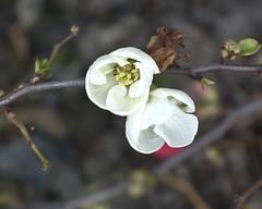 Een paar vroege bloemen (marja N.) Tags: nederland dordrecht zuidholland