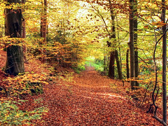 Carpet of Autumn Leaves (Habub3) Tags: autumn leaves forest canon germany carpet laub powershot wald teppich g12 2015 deutschlad habub3