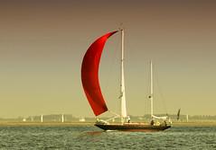 Sailing (Duevel) Tags: red water zeilen sailing yacht zeeland zee sail rood zeil oosterschelde zeiljacht