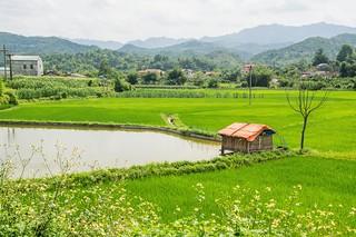bac son - vietnam 2