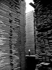 Man standing in the lumberyard of Seattle Cedar Lumber Manufacturing, 1939 [960 x 1280] #HistoryPorn #history #retro http://ift.tt/1TPdwC3 (Histolines) Tags: seattle man history standing x retro cedar timeline 1939 lumber lumberyard 1280 manufacturing 960 vinatage historyporn histolines httpifttt1tpdwc3