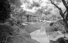 Jardin Japonais de Toulouse (JiPsSTiCk) Tags: bw nikon hp5 nikkor nikonf ilford argentique 21mm sekonic
