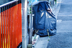Today's Cat@2016-06-03 (masatsu) Tags: cat pentax catspotting mx1 thebiggestgroupwithonlycats