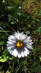 113 (jurinkof) Tags: fleurs blten   kvety kvty