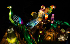 _DSC9683_2 (Elii D.) Tags: light fish flower animal night zoo monkey neon dragons lantern lampion dargon