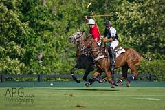 Airborne (APGougePhotography) Tags: new bridge horse nikon south southcarolina pony adobe carolina mallet polo equestrian aiken topaz d800 lightroom saddlery adobelightroom topazlabs nikond800 topazdetail