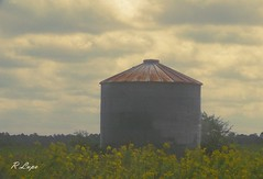 Country Scene (R.F. Lupo (random off and on-ness, more off)) Tags: life autumn light tree fall sunshine yellow clouds rural golden rust scenery moody cloudy steel horizon country gray goldenrod scene silo east eastern countryliving