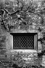 Cotehele Courtyard Window B&W (ir0ny) Tags: bw window blackwhite courtyard tudor devon elizabethan nationaltrust cotehele