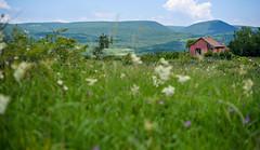 DSC_1560-Edit (Klosi Tams) Tags: house green nature landscape 50mm nikon hungary d750 nikkor 18 szentendre pilis