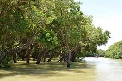 lac tonle sap - cambodge 2014 20 (La-Thailande-et-l-Asie) Tags: cambodge lac tonlsap