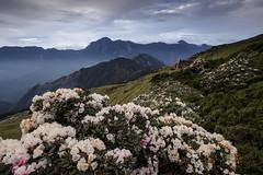 Mt.Hehuan, Taiwan _IMG_9385 (Len) Tags: mountain flower taiwan  hy 6d  nantou    mthehuan    ef1635mmf28liiusm  1635lii    hehuaneastpeak    hehuanepeaktrail