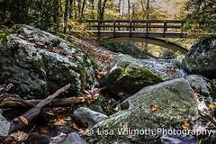 low-rez-4781 (lisawilmothphotography) Tags: bridge fall nc october stream trail blueridgeparkway 2015 tanawhatrail