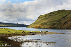 Cows and Boats (maureen bracewell) Tags: mountains nature sunshine landscape scotland spring highlands cows isleofskye may loch scottishhighlands oldboats maureenbracewell