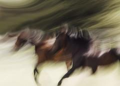 tonyworkshop420 (Muddy Love Photography) Tags: horses horse winner wyoming herd