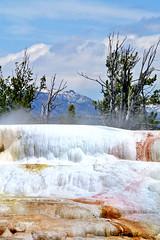 Hot-hot-hot! (anne makaske) Tags: trees usa mountain nature water dead montana geyser hotspring damp boil fumes yellowstonepark smellslikerotteneggs