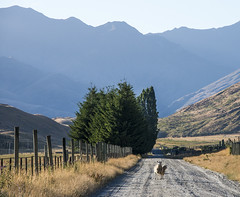Are we lost ma? (Ian@NZFlickr) Tags: road country nz wanaka