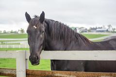Star Power (shirley319) Tags: horse unitedstates lexington kentucky may nationals equestrian 2016 d600 horsecompetition ihsa kentuckyhorsepark