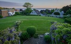 Evening view (frankmh) Tags: summer garden landscape denmark evening skne sweden outdoor wisteria resund hittarp