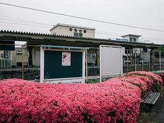160528_230_P1080139 (oda.shinsuke) Tags: flower station railway  vsco   heiwadaistation