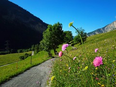 Inspirations ... (anbri22) Tags: anbri flowers mountains inspirations vallese leukerbad