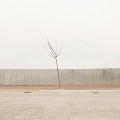 (Carlo Pedretti) Tags: winter tree fence square albero inverno quadrato urbanlandscape recinzione nobodyisthere paesaggiourbano nikond3 dsc2838