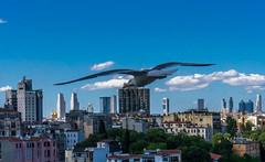 DSC00331-2 (UmitCukurel) Tags: turkey seagull sony turkiye istanbul pajaro bosphorus marti lightroom galata goldenhorn halic a7ii