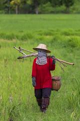 ChiangRai_8070 (JCS75) Tags: canon thailand fishing asia asie chiangrai thailande