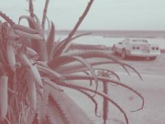 flor (Ale.Salgado) Tags: auto mar flor playa corvette