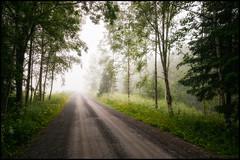 In i dimman (Jonas Thomn) Tags: road morning flowers trees summer tree grass fog landscape blommor gravel trd sommar grus vg morgon landskap dimma grs