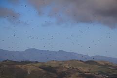 IMG_3971 DPP (kiivikarhu) Tags: winter newzealand june seagull wellington talvi landfill walkingtrail keskuu uusiseelanti kaatopaikka lokkeja colonialknob canon70d kvelyreitti spicerlandfill