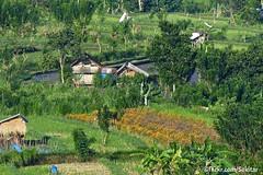 Fertile landscape, Karangasem Bali (Sekitar) Tags: indonesia bali asia pulau island gunung seraya ricefield karangasem pemandangan landscape subur fertile earthasia