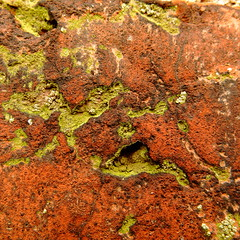Red Brick Gothic (vertblu) Tags: red abstract macro brick green texture decay surface textures weathered lichen abstraction makro abstrakt redbrick 500x500 yellowishgreen complementarycontrast flickrphotowalk macrotextures macromondays oppositecolours texturesquared aglitchinthesystemanabstractviewofdailylife vertblu