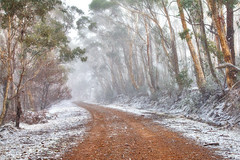 Snowing On Country Roads || CENTRAL TABLELANDS || NSW (rhyspope) Tags: road street new trees winter white snow storm pope cold ice nature weather wales forest canon gum woods native south central australian australia nsw 5d aussie avenue rhys oberon gravel mkii tablelands rhyspope