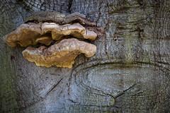 clingendael-7812 (Arie van Tilborg) Tags: japanesegarden hague thehague clingendael japansetuin clingendaelestate landgoedclingendael arievantilborg