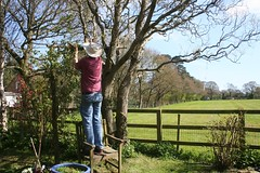 Man at work (*Susie*) Tags: field rural fence john garden willowtree rusticarch madamealfredcarriererose