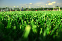 Turf (nick88078807) Tags: summer sky usa green field grass america spring earth soccer lawn depthoffield missouri blades