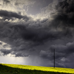 prrinage (photofabulation) Tags: sky storm green yellow clouds jaune switzerland europa europe suisse champs vert ciel fields nuages orage vaud colza romandie canoneos5dmarkiii