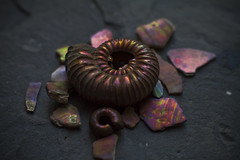 Ammonite and ammonite shell fragments (Nick Loven) Tags: uk color colour macro fossil rainbow shell ammonite iridescent wiltshire nacre nacreous pearlescent ammolite prorasenia