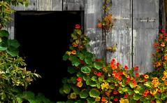 Darkness & Light (Junkstock) Tags: california wood old color building abandoned wall rural buildings dark photography photo exterior darkness photos decay rustic photographs photograph weathered aged norcal distressed patina ruralexploration oldandbeautiful