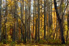 neada Krklareli (recepmemik) Tags: autumn turkey trkiye ineada krklareli gz recepmemik
