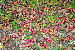 IMG_1118 (moutoons) Tags: fruit jaune automne rouge eau couleurs rivière pont porte nuage gorges tarn marron cascade arbre château champignon brume verte pomme croix feuille poire légume quézac lozère cévennes coing ispagnac