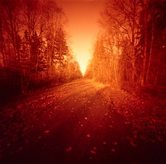 trail in the forest (skarbonke) Tags: 120 film pinhole analogphotography dacora fujicolorpro400h redscale