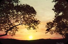 """ E dessa insustentvel leveza de ser, eu gosto mesmo  de vida real. Elevei, minha alma pra passear ..."" (Nao Zumbi) (Eline Cristine) Tags: sunset naturaleza sun art texture luz sol colors brasil sunrise vintage photography flickr pastel cu days click poesia 365 fotografia tones inspiracion tons 2014 delicadeza ilumina lomograpy gex5 brasilemimagens lainecristine vision:sunset=057 vision:mountain=0511 vision:sky=087 vision:outdoor=0721 vision:clouds=0512"