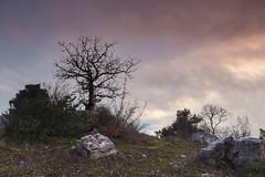 Magic Hill (Robert Marić) Tags: old sky tree history nature moss spring ancient rocks magic hill ceremony hills observatory stonehenge orion ritual pyramids pagan istra eia tumulus poreč parenzo istrian histri histra mordele picugi